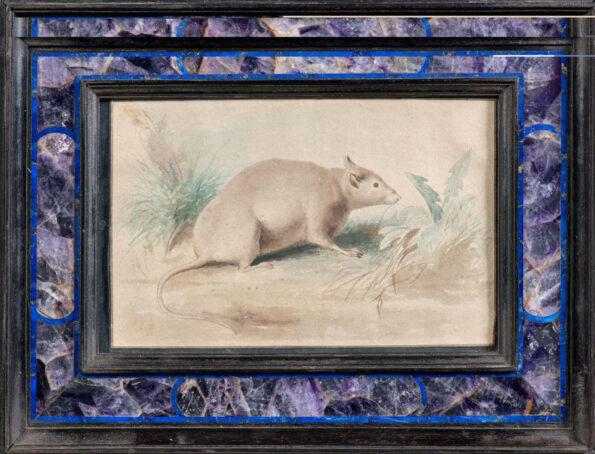 Tempera su carta entro cornice in ebano Ametista e lapislazzuli raffigurante un topo